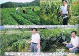 Crescimento de planta de Unigrow para alguma plantação vegetal