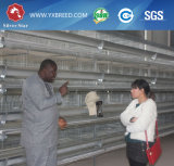Cage galvanisée pour le marché de la Zambie
