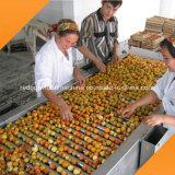 De Machine van de Fruitverwerking van de Pruim van de Abrikoos van de perzik