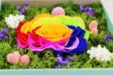 Flor fresca preservada duradera