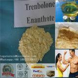 Muskel-Wachstum-Steroid-Puder (CAS 10236-47-2) Trenbolone Enanthate