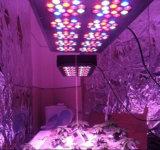 300W完全なスペクトルの高い内腔LEDは温室(アポロ10)のために軽く育つ