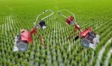 販売のための農業機械1-3の列の水田の除草機