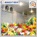 Congelatore/cella frigorifera per le verdure e la patata Apple del pomodoro della frutta