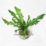 Planta artificial de la margarita de corona con el crisol del vidrio de agua del Faux