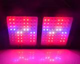 Hydroponic LED는 가벼운 가득 차있는 스펙트럼 600W를 증가한다