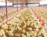 Light Steel Chicken Farm House com equipamentos de aves de capoeira