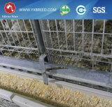 Jaulas de batería de las aves de corral del equipo de granja para el pollo tomatero