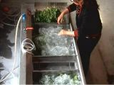 野菜フルーツのサーフの洗浄ラインクリーニング機械