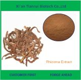 10: Rhizoma自然なTyphoniiのエキスの巨大なTyphoniumhの1つの根茎