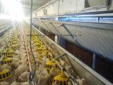 De Bouw van de Bouw van het staal met Installatie en Apparatuur voor Kip