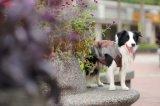 Animali domestici impermeabili che coprono per il cane