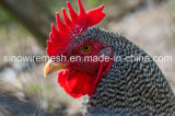 Sailin galvanizou o fio de galinha da exploração agrícola