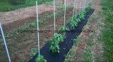 Hochfeste beständige Fiberglas-Stange-Pflanzenuvstange