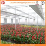 Landwirtschaft/kommerzieller Plastikfilm-Garten-grünes Haus für Blumen