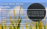 Extracto orgânico de algas solúveis em água potável