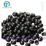 Hochwertige Non-Genetically geänderte organische schwarze Bohnen