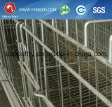 Cage de 15000 de ferme d'échelle oiseaux de volaille dans la ferme de la Zambie et la ferme du Ghana