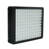 Fábrica Best Selling 600W LED Grow Light para plantas médicas