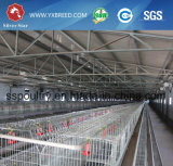 Cage de poulet à rôtir avec le matériel automatique de volaille pour le Zimbabwe