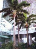 Verisimilitude 5 искусственной метров пальмы кокоса