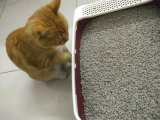 Katze King Bamboo Friber Tofu Cat Litter