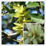 Poudre naturelle de l'extrait Taxifolin/Nature Dihydroquercetin de Dihydroquercetin Taxifolin/Plant, extrait de Japonica de Sophora, Taxifolin