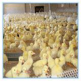 Rede das aves domésticas/engranzamento da galinha/engranzamento plástico/rede inferior