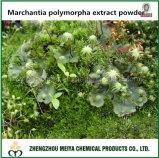 Poudre de Liverwort/d'extrait Polymorpha de Marchantia avec 20%, saponine de 50%