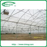 Multi Span Film Greenhouse для Seeding