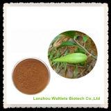 Polvo orgánico de calidad superior de la hoja de Silvestre del Gymnema