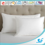 Hotel를 위한 기털 & Down Square Cushion Insert Pillow