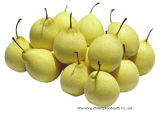 Frisches Ya Pear mit High Exporting Quality 2016
