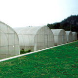 Het grote Groene Huis van de Tunnel van de Plastic Film voor Verkoop