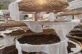In 33 Jahren alten chinesischen Yunnan-rohen Puer Tee-/Abnehmen des Tea/Highquality grüne Nahrungsmitteltees