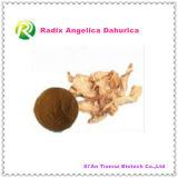 Polvo natural de Dahurica de la angélica de raíz del extracto de la planta de la alta calidad