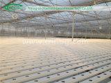 Serre chaude végétale commerciale de culture hydroponique