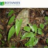 Capra cornea Weed Extact Icariin 10%-50% dell'estratto della pianta