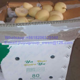 Food Grade New Crop Top Quality Pear