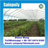 Groene Huis van de Film van Multispan het Landbouw voor Tomaat