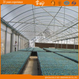 Seeding를 위한 네덜란드 Technology 다중 Span Plastic Film Greenhouse