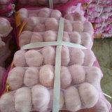 Aglio bianco normale fresco imballato piccolo sacchetto (5cm)