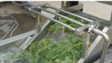 Lavadora vegetal de la burbuja de la ráfaga y de la potencia del agua, arandela vegetal Tsxq-40