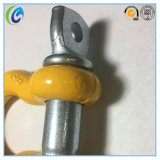 U. S Type Screw Pin Anchor Shackle