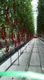 Estufa da folha do policarbonato para o mini crescimento do tomate