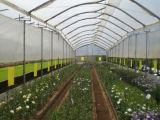 Het Opleveren van het anti-insect voor de Serre van de Landbouw