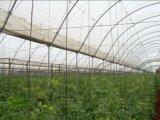 плетение Анти--Насекомого сетки 50X25 для земледелия