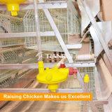 Approvisionnement direct d'usine de Tianrui un type cage complètement automatique de couche de poulet