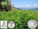 Extrato natural de 100% Andrographis Paniculata: Andrographolide 5% - 98% por HPLC; 10:1, 4:1