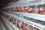 Cage de poulet de couche de qualité pour la ferme avicole